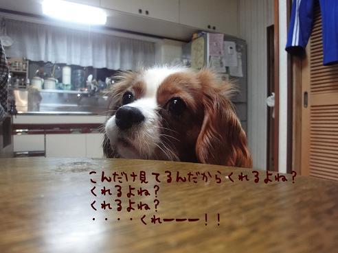 005_20100128223031.jpg