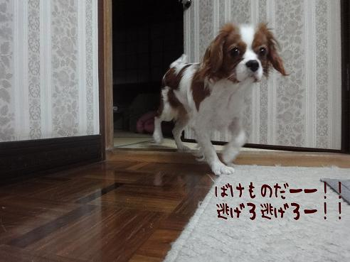 006_20100122222019.jpg