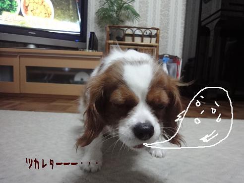 006_20100330230804.jpg