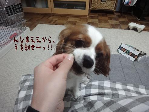006_20100420223553.jpg