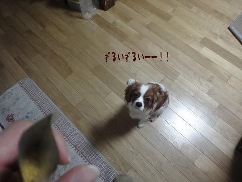 008_20100224215243.jpg