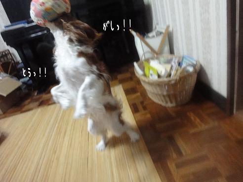 008_20100831222203.jpg