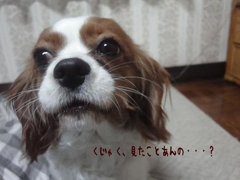 010_20100410223533.jpg