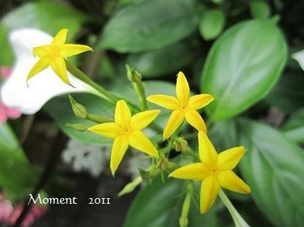 黄色い星b