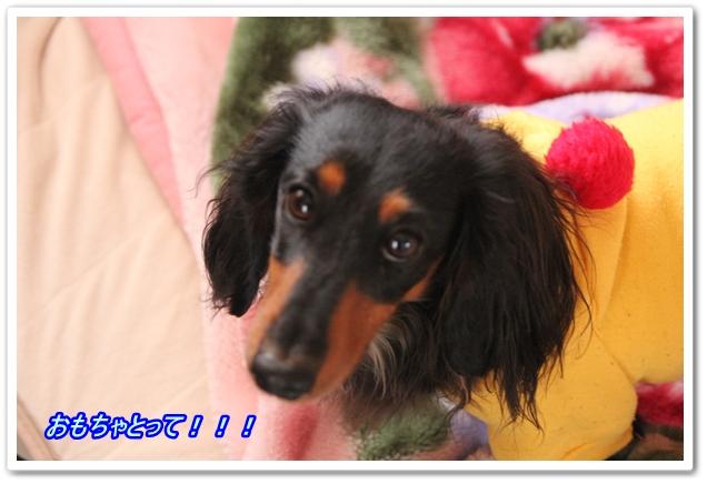 2013_02_11_2463-1.jpg