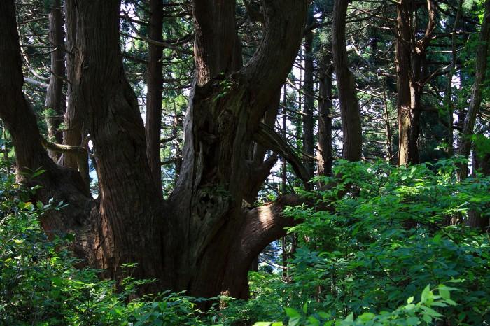 幻想の森6