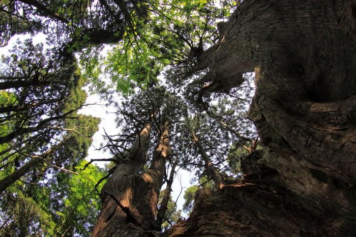 幻想の森5