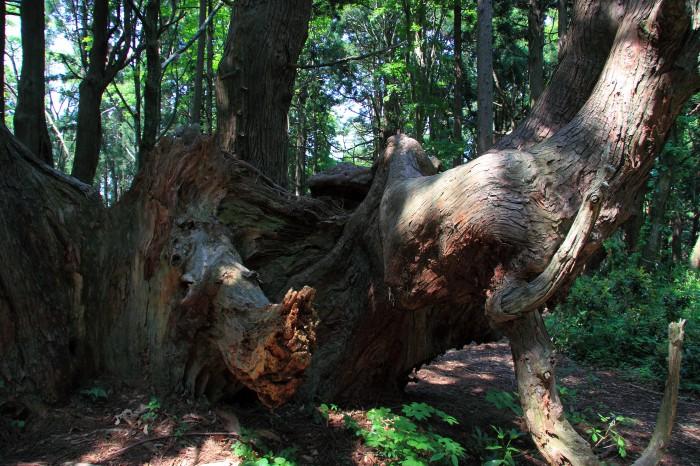 幻想の森3