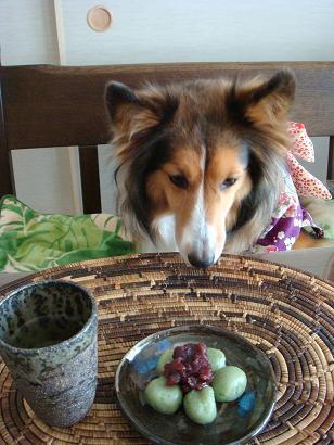 私も食べていいの?