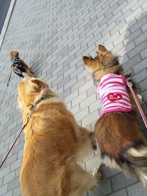 大中小犬の散歩