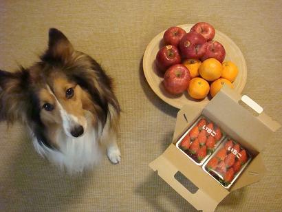 買った果物