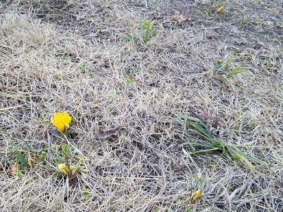 春も近付いているのに?