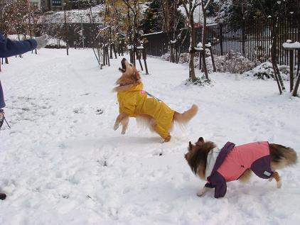 雪遊びって楽しいね♪