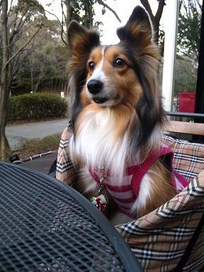 公園散歩とカフェで決まりね