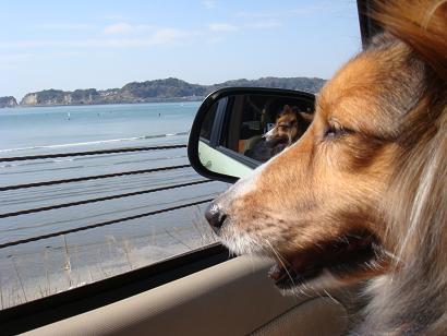 海散歩日和だわん