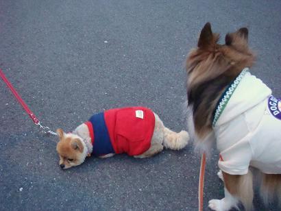 アトム!歩きなさい!!