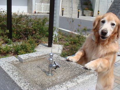 お水飲みたいわん