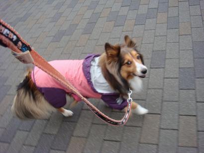レインコートで散歩だわん