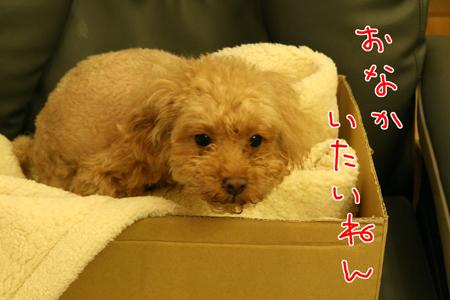 IMG_3943.jpg