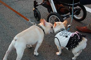 もん工房とエクセレントな犬たち 137