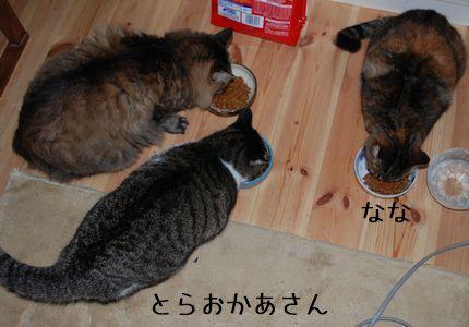 1_20100926075252.jpg