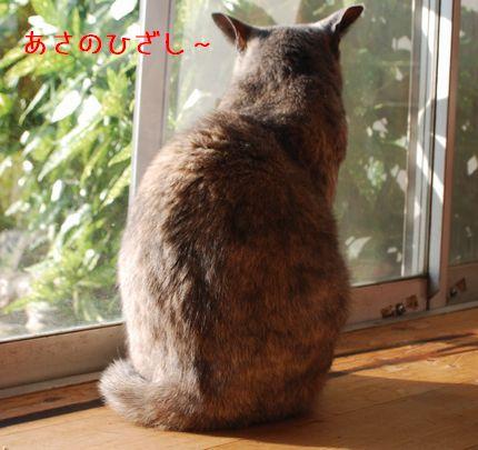 1_20101008092219.jpg