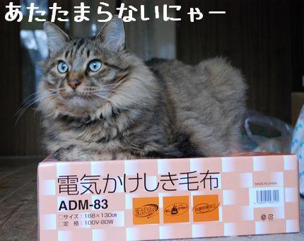1_20101021231905.jpg