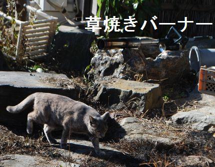 1_20101127223532.jpg