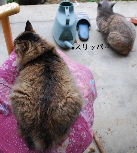2_20100910121753.jpg