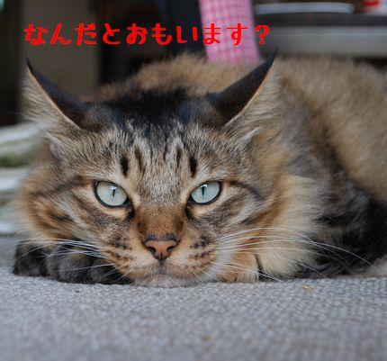 2_20100919223431.jpg