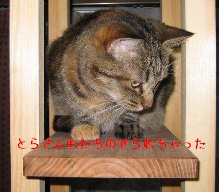 2_20100924100417.jpg