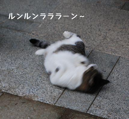 2_20100925123908.jpg