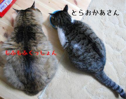 2_20100926075252.jpg