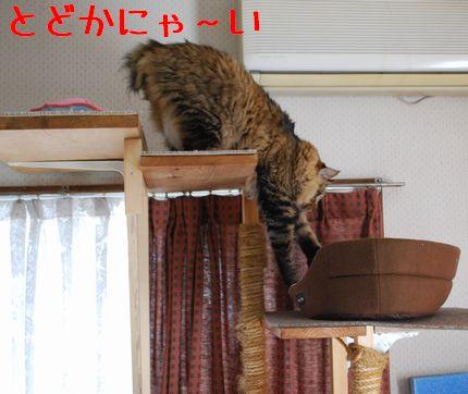 2_20101010112547.jpg