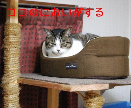 2_20101013065544.jpg