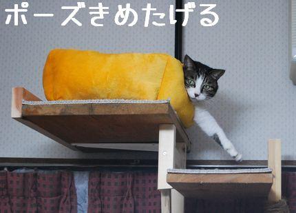 2_20101016081510.jpg