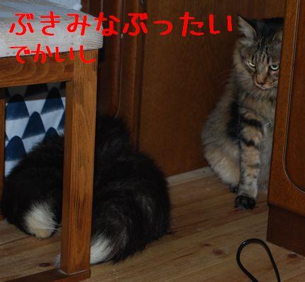 2_20101103123016.jpg