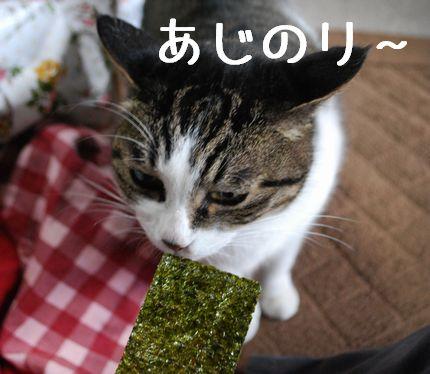 2_20101110081215.jpg