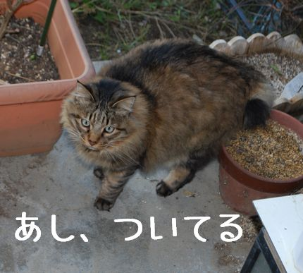 2_20101111082136.jpg