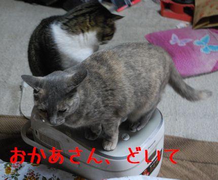 2_20101112083833.jpg