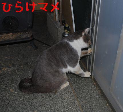 2_20101120224131.jpg