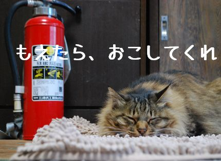 2_20101130083858.jpg