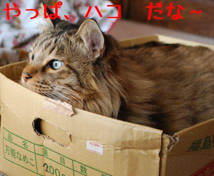 2_20101205121529.jpg
