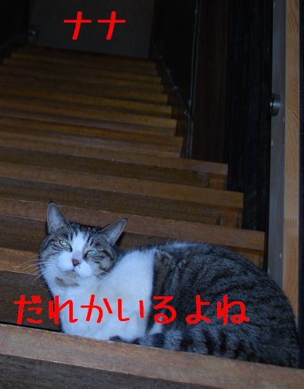 2_20101213201607.jpg