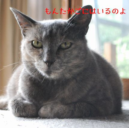 3_20100919223430.jpg