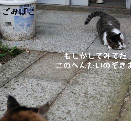3_20100925123908.jpg