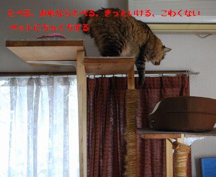 3_20101010112547.jpg