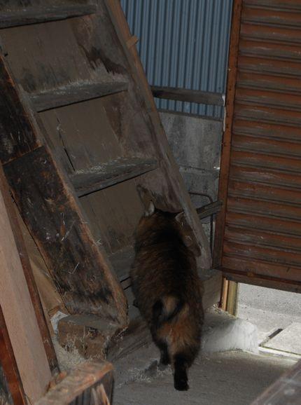 3_20101020084051.jpg