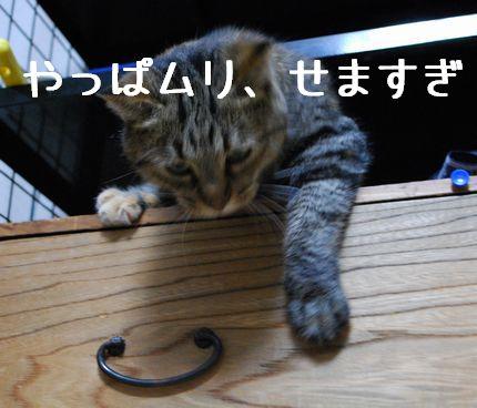 3_20101022202404.jpg