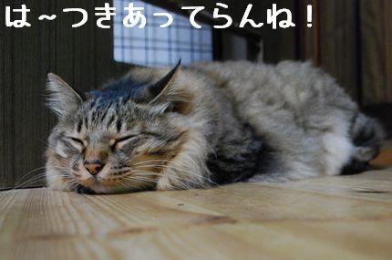 3_20101026081958.jpg